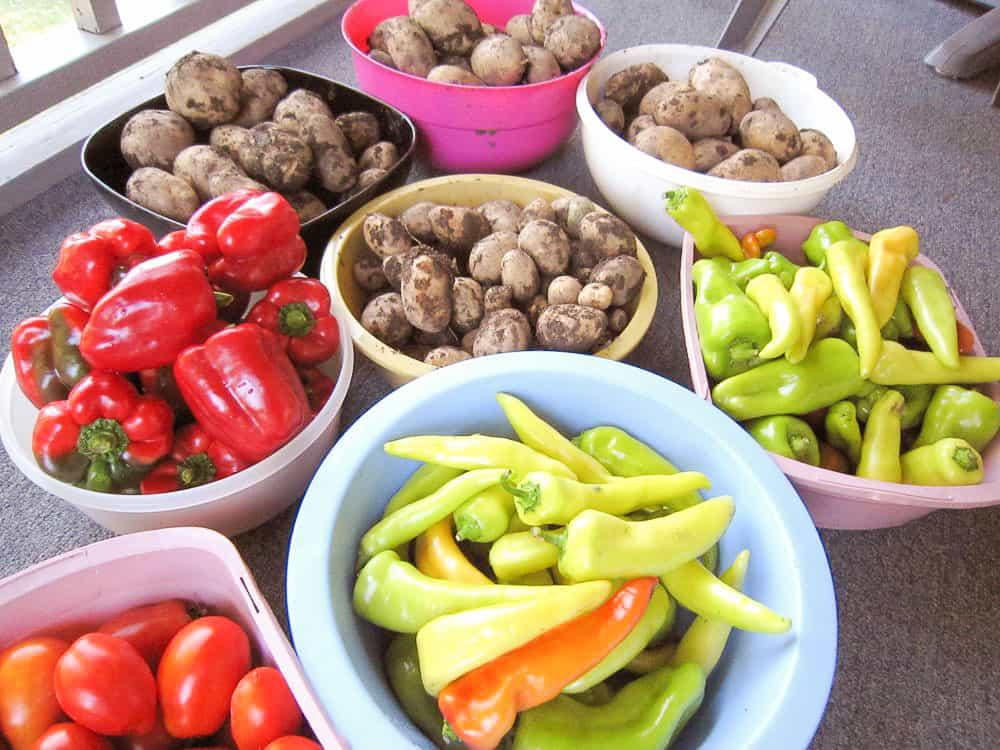 Vegetables, garden